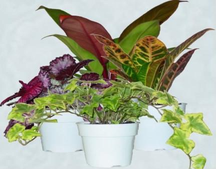 4foliageplants