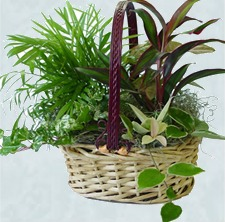 Foliage Basket